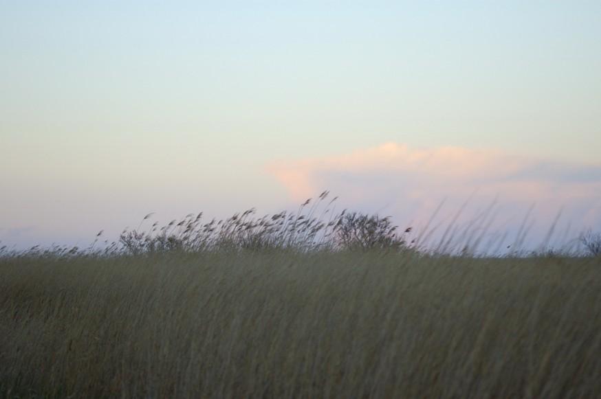 Delta del Ebro. Les Olles