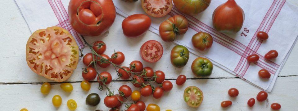 pavías con tomates